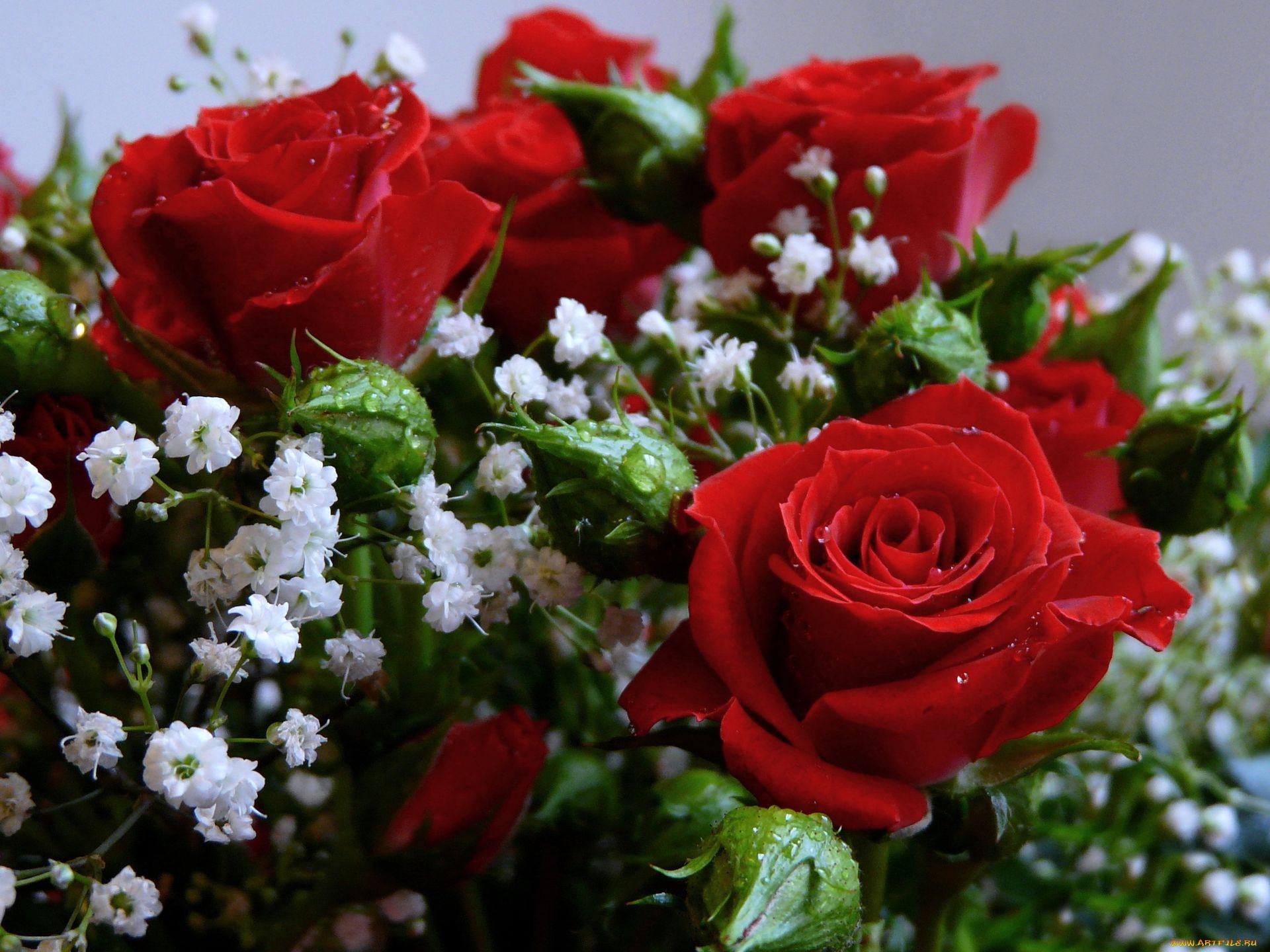 Красивые букеты роз большие фото 6